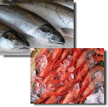 image of krill for the aquaculture industry
